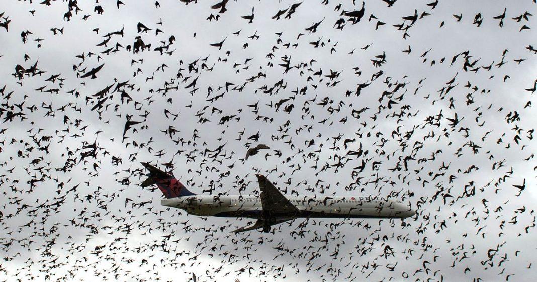 Birds-around-place