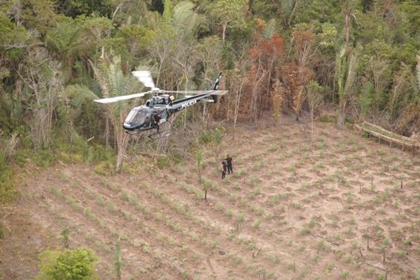 Operação do GTA/MA na destruição de plantação de maconha