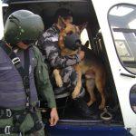 Militares serão treinados para embarcar e desembarcar cães no Hárpia 05