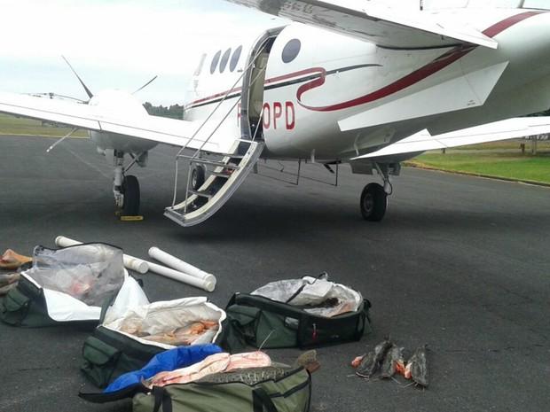 Peixes e carnes de jacaré seriam transportados para Minas Gerais na aeronave de um dos presos (Foto: Divulgação/Ciopaer)