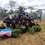 CTA/MA: Roças de maconha são erradicadas em três municípios maranhenses