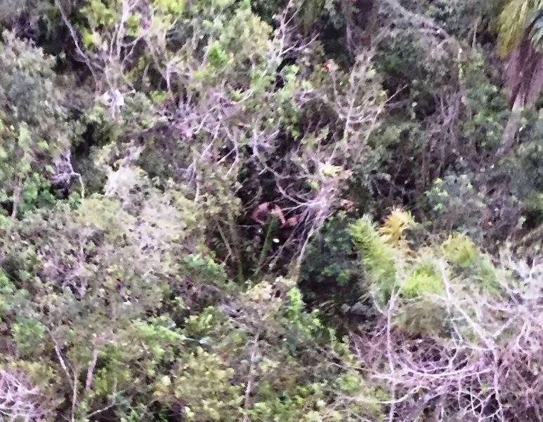 Águia 01 recupera veículo e prende foragido em Joinville