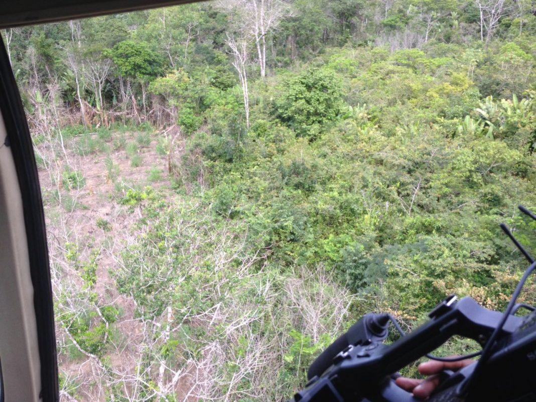 Centro Tático Aéreo participa da maior operação de erradicação do plantio de maconha no Maranhão