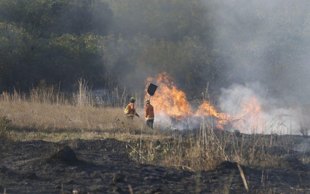 Brigadistas do Corpo de Bombeiros do DF combatem incêndio na Flona (Foto: CBMDF/Divulgação)