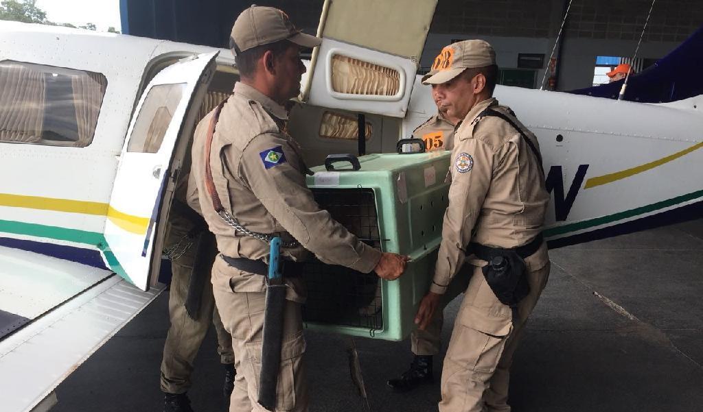 Policiais participam de instrução com embarque e desembarque de cães em aeronave