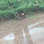 Ação do Batalhão de Polícia Rodoviária com apoio do 4°BPM e BPMOA termina com a apreensão de 198kg de maconha em Doutor Camargo