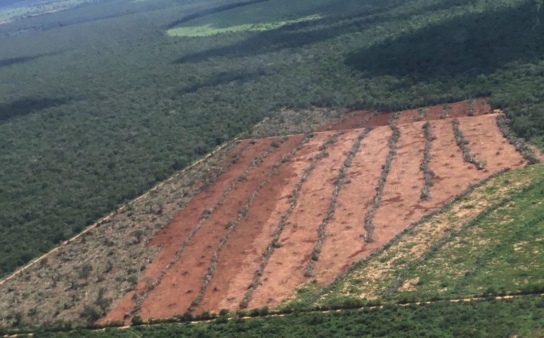 GRAER atua em conjunto com Ministério público da Bahia contra crimes ambientais
