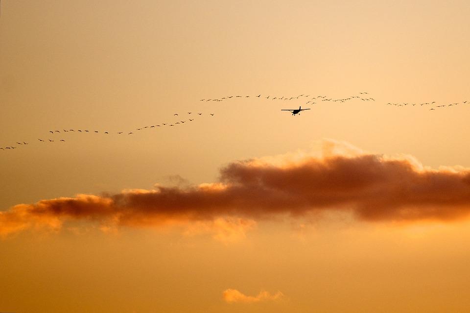 birds-1180731_960_720