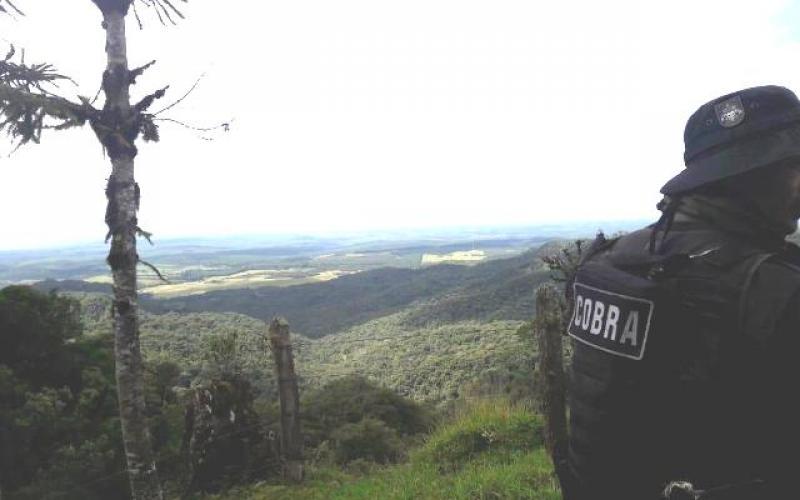Equipes do Cobra na mata (Foto: Divulgação PM)