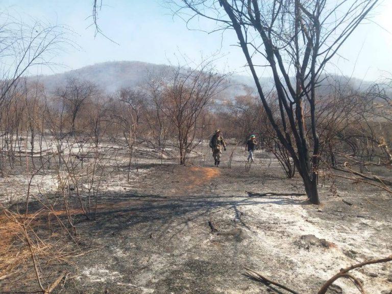 Mata queimada na Serra da Bertioga em Icó