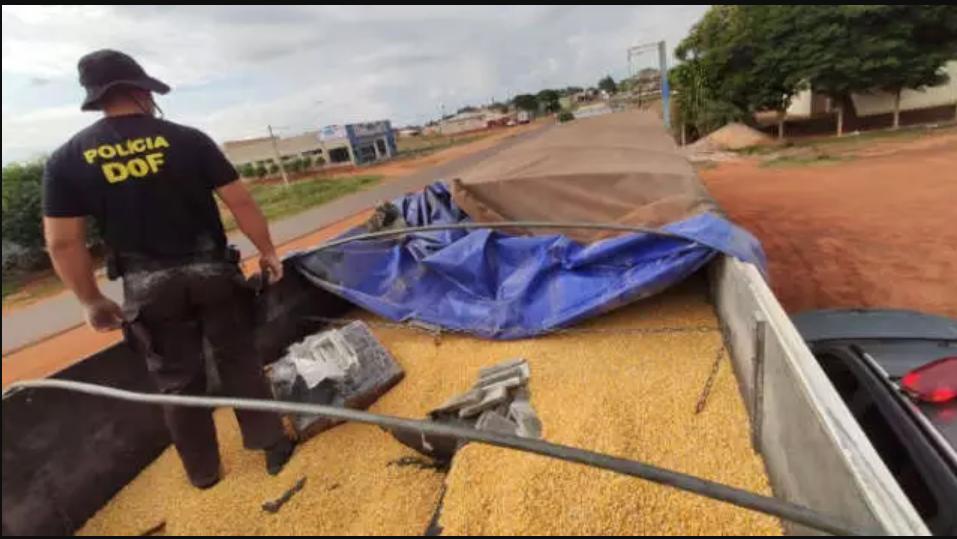 Policial do DOF após encontrar tabletes de maconha escondidos sob carga de milho. (Foto: Divulgação) - CREDITO: CAMPO GRANDE NEWS