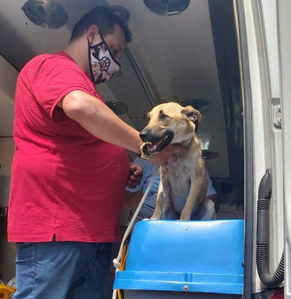 achorro está bem e já está aos cuidados do Samu Animal de São Vicente, SP — Foto: G1 Santos